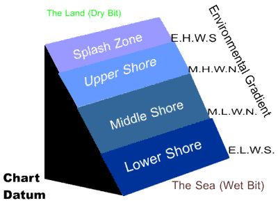Tidal zone diagram