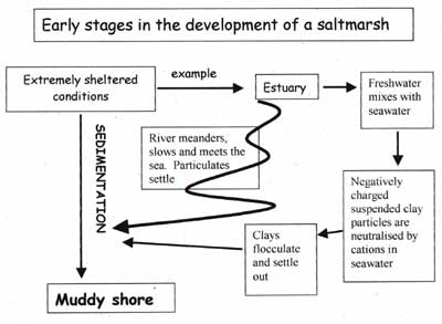 fsc (field studies council) bringing environmental understanding Salt Marsh Mammals salt marsh diagram